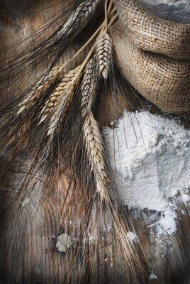 Obraz Pšenice uši