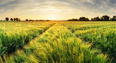 Obraz Pšeničné pole krajiny s cestou v době západu slunce