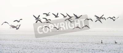 Obraz Ptáci létající přes zasněžené pole v zimě
