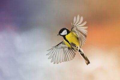 Obraz pták fly roztáhnout svá křídla na obloze při západu slunce