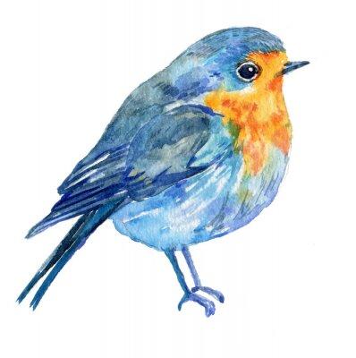 Obraz pták na bílém pozadí .illustration akvarel na