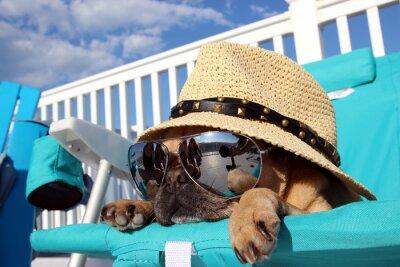 Obraz Pug Relaxační Beach Chair
