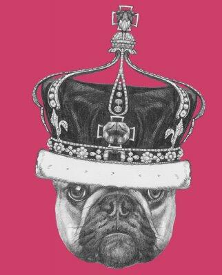 Obraz Původní kresba francouzský buldoček s korunou. Samostatný na barevném pozadí