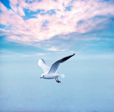 Obraz racek tyčící se proti obloze mraky