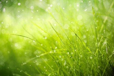 Obraz Ranní rosa na jarní trávy