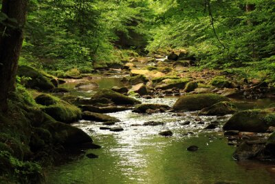 Obraz řeka v lese