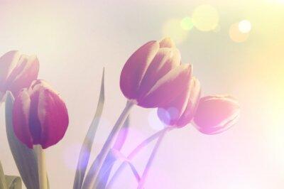 Obraz retro tulipány