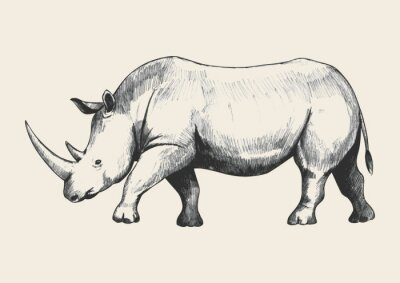 Obraz Rhino Sketch