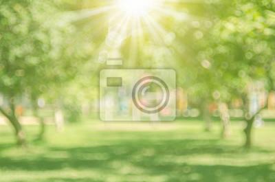 Obraz Rozostřený zelený park s slunečním světlem abstraktní pozadí.
