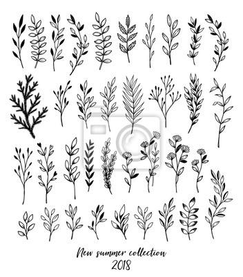 Rucne Kreslene Vektorove Kvetinove Prvky Listy Kvetiny Viry