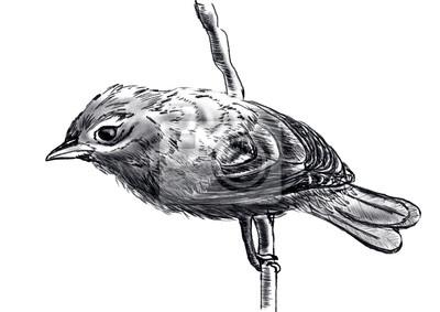 ručně nakreslit pták