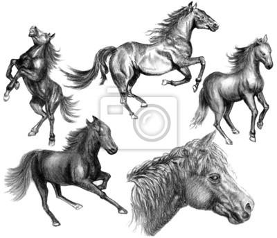ruční kreslení náčrtu koně