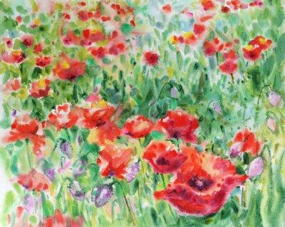 Obraz Rudého máku květiny na pozadí, akvarel.