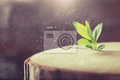Obraz Růst nového života na pozadí
