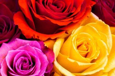 Obraz růže pozadí