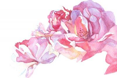 Obraz růžová pozadí akvarel ilustrační