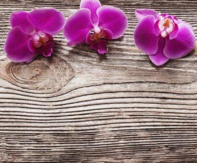 Obraz Růžové květy orchidejí na dřevěném pozadí