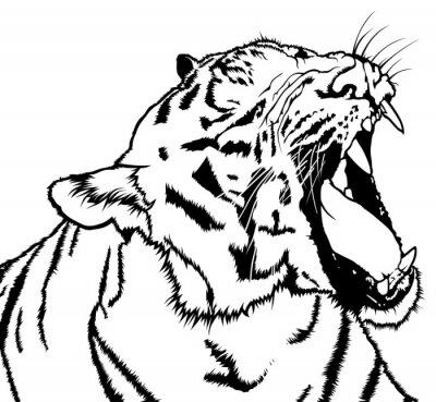 Obraz Řvoucí Tiger - černobílá kresba ilustrace, vektor