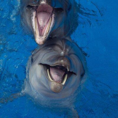 Obraz S úsměvem delfín