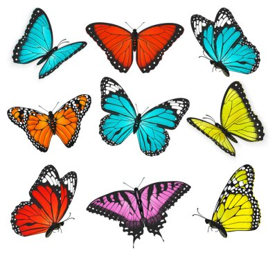 Obraz sada realistické barevných motýlů ilustrace