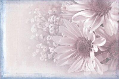 Obraz sedmikráska kytice s pastelově růžové texturou překrytí a modrém rámečku