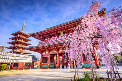 Obraz Sensoji Temple v Asakusa, Tokio, Japonsko