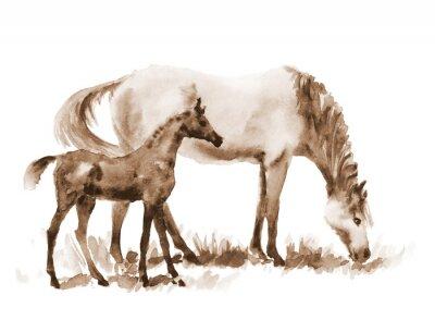 Obraz Sepia akvarel kobyla a hříbě na bílém. Krásné ručně malované ilustrace dvou koní na hřišti.