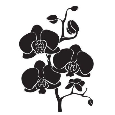 Obraz Silhouette orchidej pobočka
