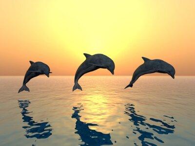 Obraz Skákání Delfíni