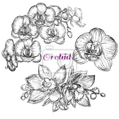 Obraz skica styl Black Orchid