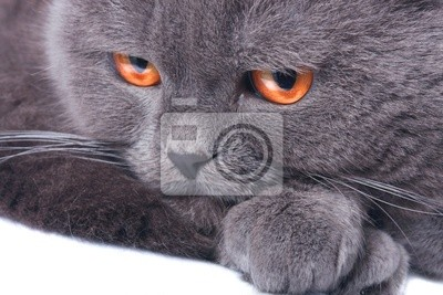 jsme chlupatá černá kočička pouze nahá kočička