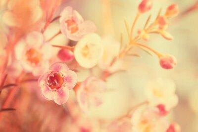 Obraz Sladký tón a změkčující květiny