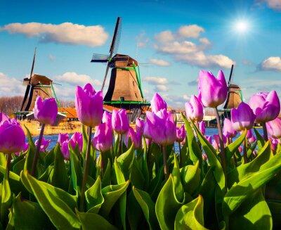 Obraz Slavné holandské větrné mlýny