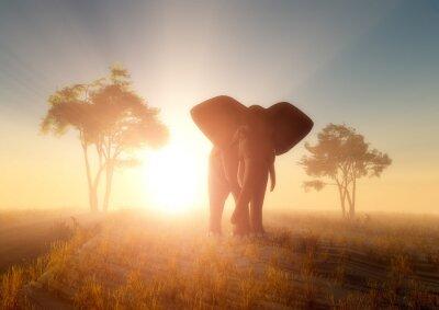 Obraz Slon