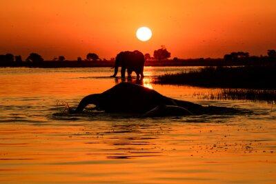 Obraz slon při západu slunce