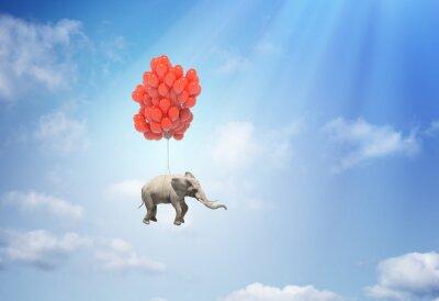 Obraz Slon s balonky