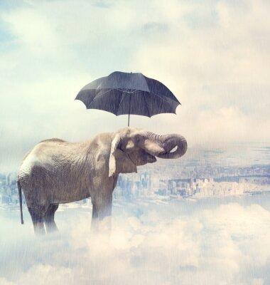 Obraz Slon se těší déšť avobe města v oblacích