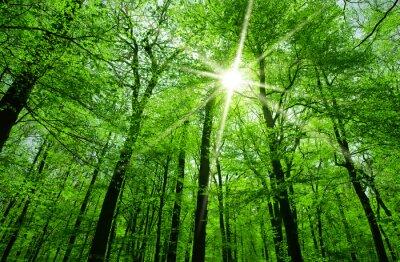Obraz Slunce svítí přes větve stromů