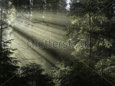 Obraz Slunce svítilo stromy