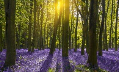 Obraz Sluneční světlo vrhá stíny přes zvonků v lese