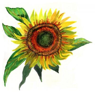 Obraz slunečnice, akvarel