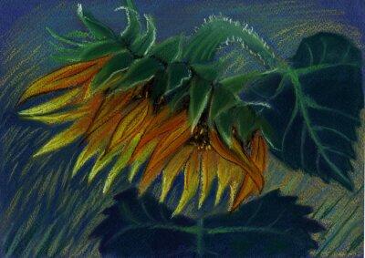Obraz slunečnice. pastel