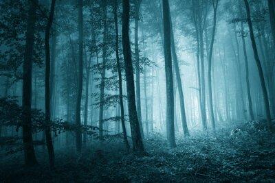 Obraz Snová mystik modrá barva mlhavo prales