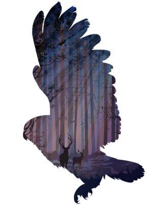 Obraz sova