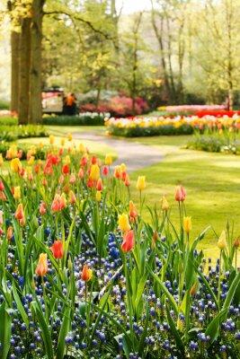 Obraz spring Garden