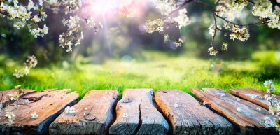 Obraz Spring Table With Trees In Blooming And Defocused Sunny Garden In Background