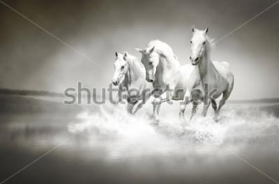 Obraz Stádo bílých koní protéká voda