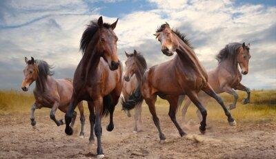 Obraz stádo koní