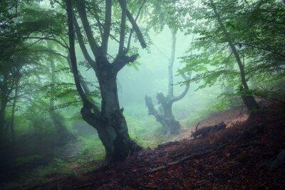 Obraz Stezka přes záhadné tmavé starého lesa v mlze. Podzim
