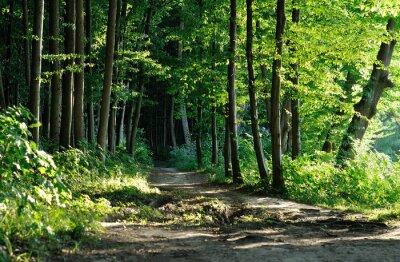 Obraz stezka v lese